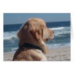 Viceroy at the Beach Greeting Card