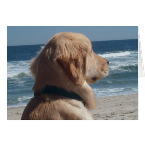 Viceroy at the Beach Stationery Note Card