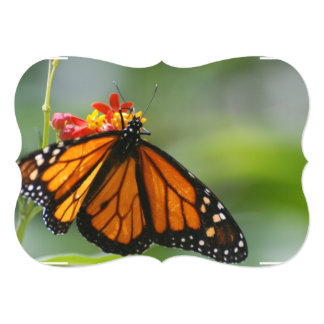 Viceroy Butterfly Announcement