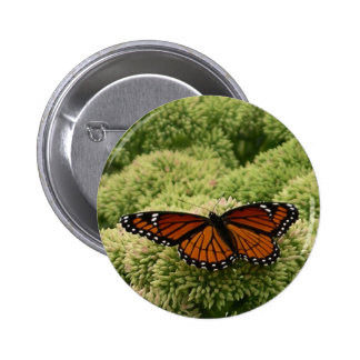 Viceroy Butterfly Beautiful Nature Photography Button
