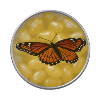 Viceroy Butterfly Beautiful Nature Photography Candy Tins