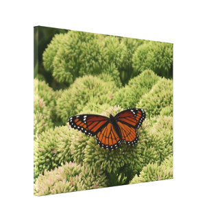 Viceroy Butterfly Beautiful Nature Photography Canvas Print