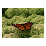 Viceroy Butterfly Beautiful Nature Photography Card