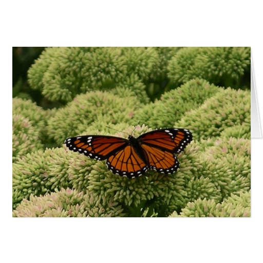 Viceroy Butterfly Beautiful Nature Photography Greeting Card