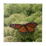 Viceroy Butterfly Beautiful Nature Photography Ceramic Tile