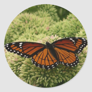 Viceroy Butterfly Beautiful Nature Photography Classic Round Sticker