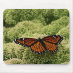 Viceroy Butterfly Beautiful Nature Photography Mouse Pad