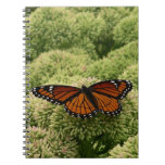 Viceroy Butterfly Beautiful Nature Photography Notebook