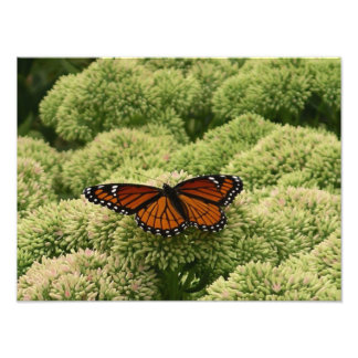 Viceroy Butterfly Beautiful Nature Photography Photo Print