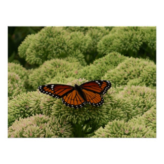 Viceroy Butterfly Beautiful Nature Photography Poster