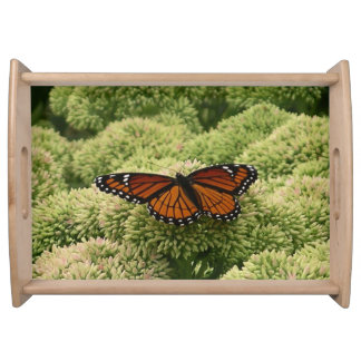 Viceroy Butterfly Beautiful Nature Photography Serving Tray