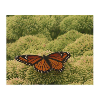 Viceroy Butterfly Beautiful Nature Photography Wood Print
