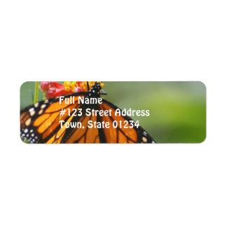 Viceroy Butterfly Custom Return Address Labels