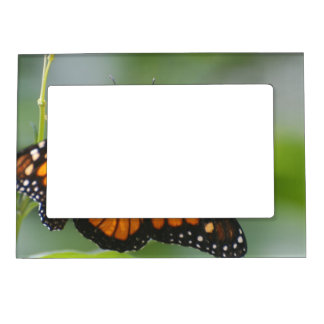 Viceroy Butterfly Magnetic Photo Frame