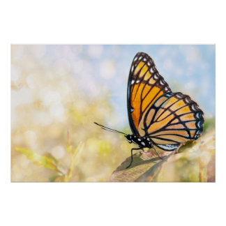 Viceroy Butterfly on Blackberry Poster