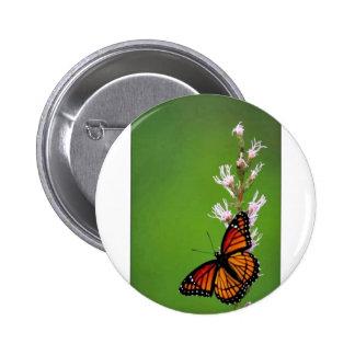 Viceroy butterfly on Dense blazingstar Pin