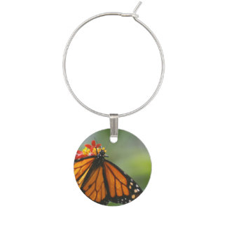 Viceroy Butterfly Wine Charm