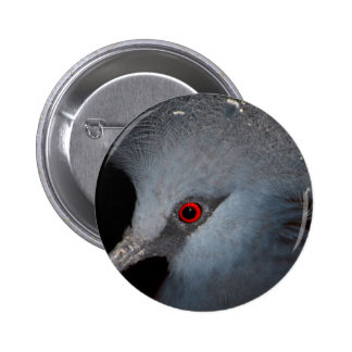 Victoria Crowned Pigeon Pinback Buttons