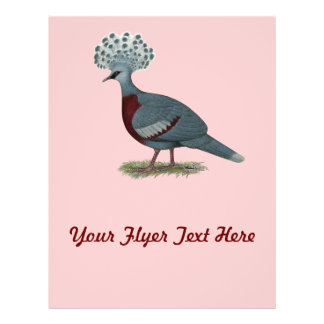 Victoria Crowned Pigeon Flyer