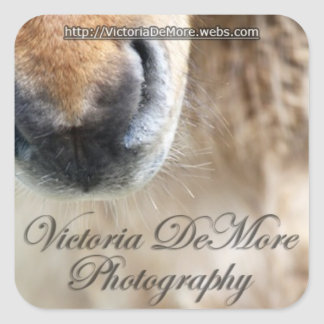 Victoria DeMore Photography Promotional Stickers