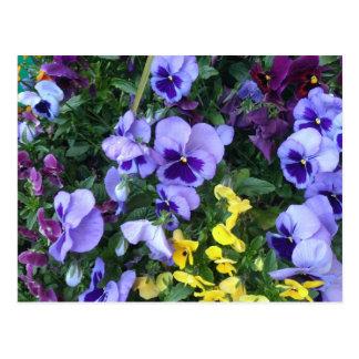Victoria Flowers Postcard