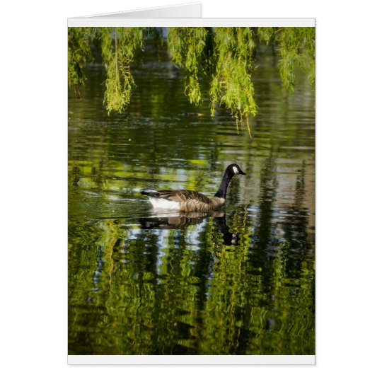 Victoria Geese 2 Card