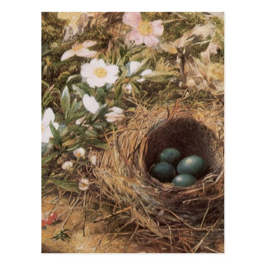 Victorian Art, Birds Nest and Dog Roses by JW Hill Postcard