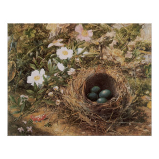 Victorian Art, Birds Nest and Dog Roses by JW Hill Poster