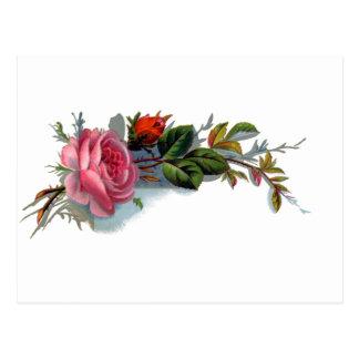 Victorian color de rosa y del brote rosado