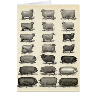 Victorian Etching of Pigs & Sheep Card