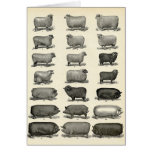 Victorian Etching of Pigs & Sheep Greeting Card