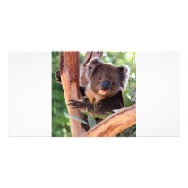 Victorian Koala Card