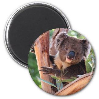 Victorian Koala Magnet