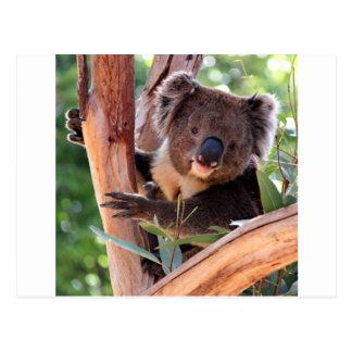 Victorian Koala Postcard