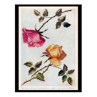 Victorian Pink and Yellow Roses Postcard