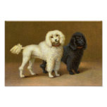 Victorian Poodle Dogs Poodles Poster