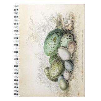 Victorian Print of Various Bird Eggs Notebook