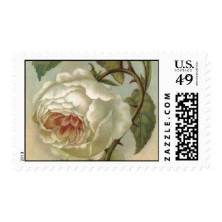Victorian Rose Postcard Illustration Postage Stamp