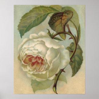 Victorian Rose Postcard Illustration Poster