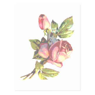 Victorian Rose Transparency Postcard