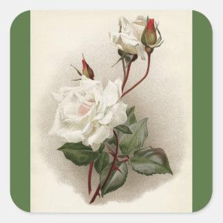 Victorian White Roses Green Square Sticker