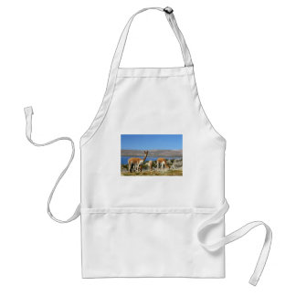 Vicuna on high alert Lauca National Park Adult Apron