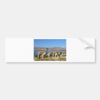 Vicuna on high alert Lauca National Park Bumper Stickers