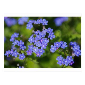 Vid azul del parque del amor de la paz del destino tarjeta postal
