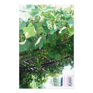 Vid de uva de Uruguay Papelería