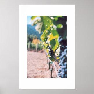 Vid de uva en el lagar de Napa Valley Impresiones