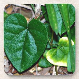 Vid en forma de corazón de las hojas posavasos de bebida