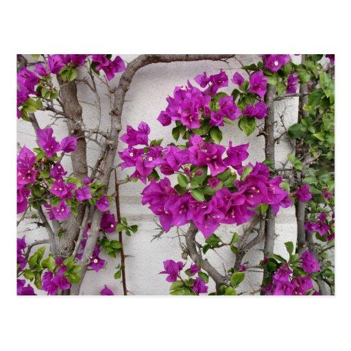 vid floral tarjetas postales