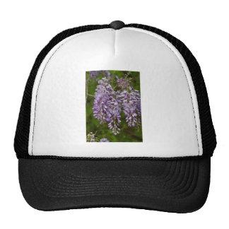 Vid púrpura del Wildflower de las glicinias de la  Gorras