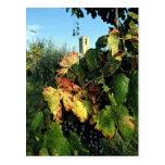 Vid, Toscana, Italia Tarjetas Postales